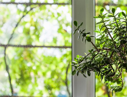 What Anlin Window Glass Package is Right for You?